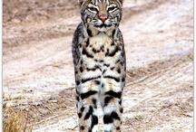 Wild / wildlife and wild things