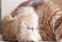 ♡ Süße Kaninchen ♡
