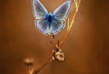 Beautiful butterflies...