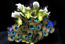 Peacocks  / by Hayley Gordon