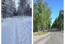 PROYECTO_ABEDULES. BIRCH_FOTOS  / De aquí parto para el proyecto Birch. Arboles Finlandia. Fotografías
