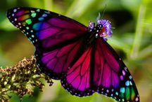 Birds and Butterflies / Love both ...