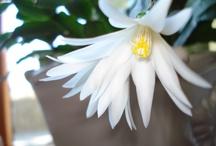 Mine blomsterbilder