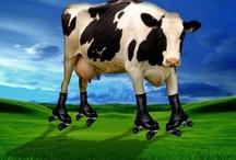 As Awkward as a Cow on Roller Skates