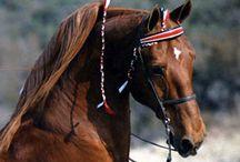 Horses / Inspiration