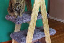 Árboles gato