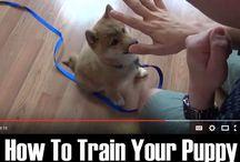 Huskies Training Dogs