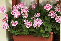My Garden Ideen / Z mojej záhradky a zo záhradôčok mojich známych. Pre inšpiráciu....