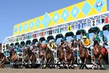 Del Mar Racing / by Winners Circle Resort