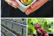 Arvores frutiferas.