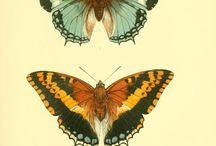 imagini pt creatii