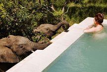 South Africa Safari Dream Trip