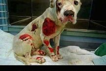 animal abuse... shame 2 mankind