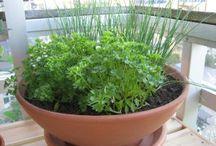 Horta -Pomar  - Terrário e PLANTA ... medicinal e jardim