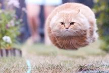 Cat Girl / by Lorraine Cherry