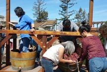 Corporate Grape Stomping Events / A great way to bring your employees together, build a stronger team, learn a bit about old school wine making, and just have some squishy fun!