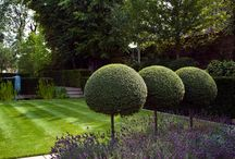 ogród nowe