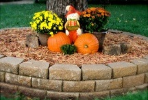 Fall Decor  / by Amanda