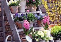 Balcony little garden ideas