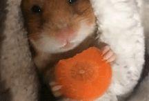 It is a hamster world