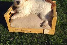 creare cuccia per cani o gatto, da una cassetta di legno / creare cuccia per cani o gatto, da una cassetta di legno
