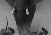 I love elephants so much they get their own board / by Andrea L Taylor