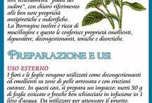 piante erboristiche