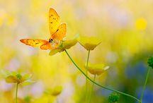 Butterflies / by Grandma Sue