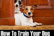 Frankies training