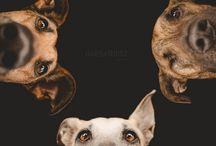 Dogleys