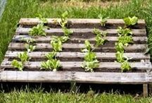 Kasvimaa& puutarhaideoita