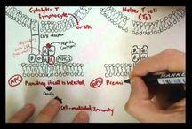 Immunology XI: MHC and Antigen Presentation / by Alfredo Corell