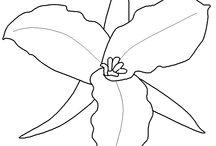 Květiny / omalovánky