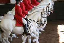TRAINING OF THE HORSE (DRESSAGE)
