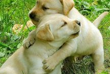 Labs / Labrador Retrievers. My favorite breed of dog