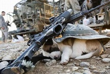 Military Working Dogs/ Pets / by Military.com