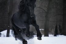 horses / by Samantha Evitts