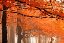 Colour of The Month - Burnt Orange / It is now September and Autumn has creeped upon us! Burnt Orange is our favourite colour for Autumn! Goodbye Summer!