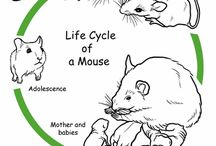 life sycle of animals
