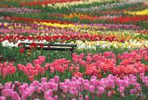 Springing into Spring!  / by Barbara Hainsworth