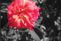 Nature photography <3 !!!!!
