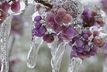 Snowflakes, Frost & Ice
