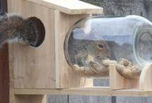 Eichhörnchen Haus