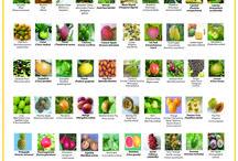 FRUIT GROWN IN BARBADOS