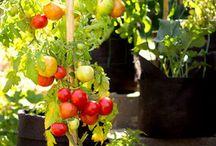Jardinage, légumes, fruits, fleurs