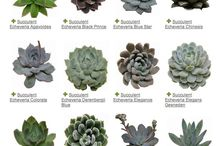 Plants / A board for all things plants. Identification guides, propagation tips and planting ideas