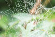 Örümcek Ağları & Spinnennetz
