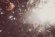 romantic / ethereal photography inspiration