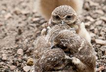 Animals - Owls