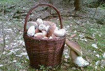 Houbařské úlovky / Pochlubte se také svými úlovky a vyhrajte praktické ceny: http://www.nahoubach.cz/galerie-ulovku/